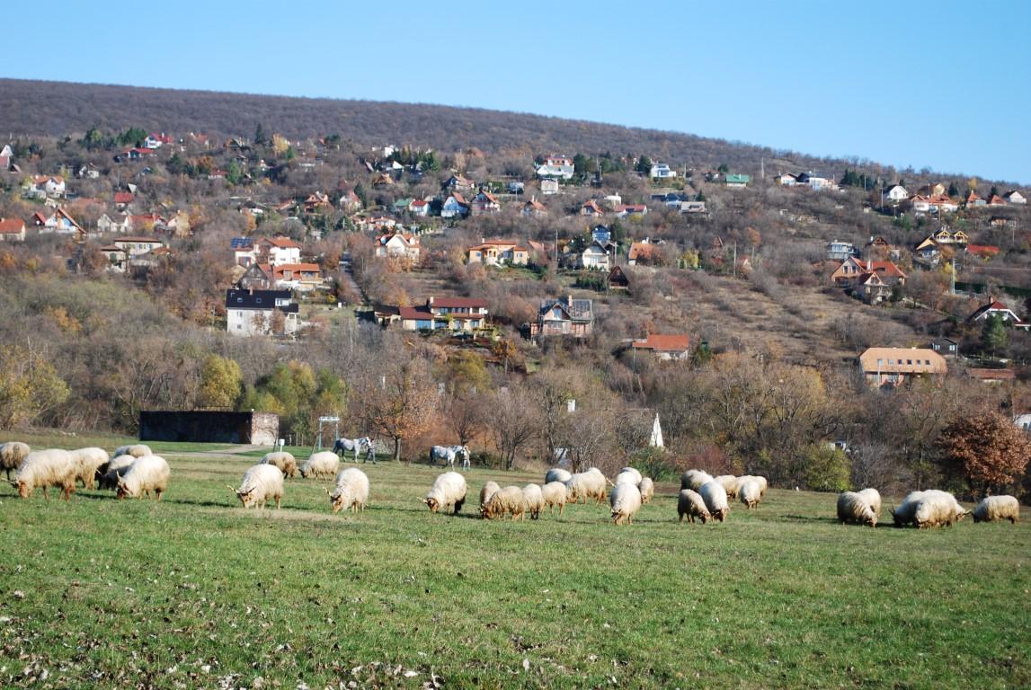 Foto: Tjaša Zidarič