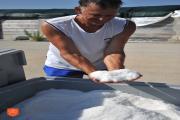 Pridelovanje morske soli v Sečoveljskih solinah. Foto: A. Jerin, 2018